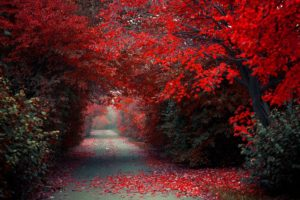 trees, Alley, Forest, Autumn, Autumn, Splendor, Path, Woods, Nature, Fall