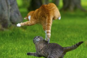 cats, Animals, Kung, Fu, Playing