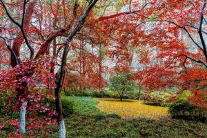 beautiful, Autumn, Maple, Leaf, Fresh, Photography