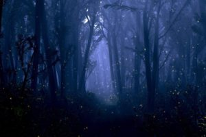 fantasy, Forest, Night, Bokeh, Trees, Firefly, Insect, Dream, Mood