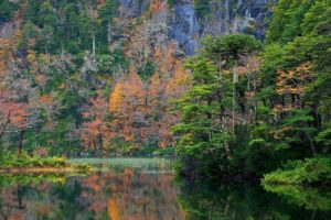 chile, Colorful, Fall, Forest, Lake, Landscape, Mountain, National, Park, Nature, Reflection, Shrubs, Trees