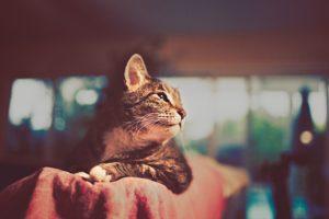 cats, Animals, Bokeh, Photomanipulations