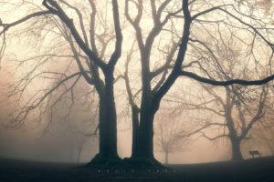 trees, Fog, Mist, Mood, Bokeh, Park, Garden, Druid, Nature