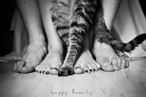 black, And, White, Cats, Animals, Feet, Grayscale, Pets, Paws