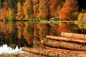 trees, Forest, House, Logs, Lake, Reflection, Autumn