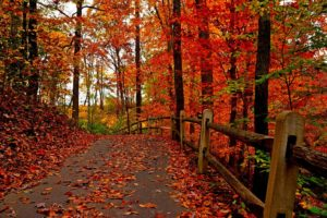 nature, Trees, Colorful, Road, Autumn, Path, Forest, Leaves, Park