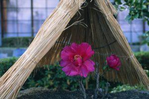 japan, Flowers, Hay