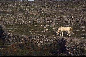 nature, Rocks, National, Geographic, White, Horse