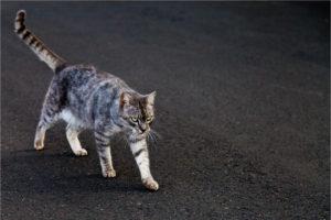 cat, Feline, Cats