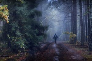 nature, Landscapes, Trees, Forests, Men, People, Mood, Autumn, Fall