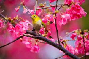 animals, Birds, Nature, Trees, Flowers, Blossoms, Colors, Pink