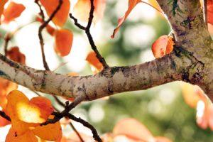 trees, Autumn, Bokeh