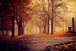 sidewalk, Path, Pathway, Park, Landscapes, Nature, Trees, Autumn, Fall, Seasons, Leaves, Fog, Mist, Haze