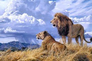 animals, Cats, Lion, Painting, Art, Landscape, Nature, Wildlife, Africa, Grass, Predator, Couple, Love, Sky, Clouds, Rain, Weather