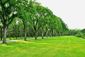park, Trees, Road, Field, Lawn