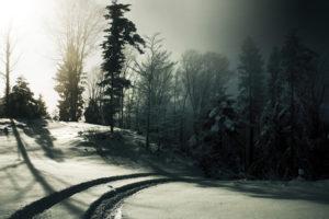 nature, Landscapes, Winter, Snow, Seasons, Trees, Forest, Sunlight, Sun, Light, Haze, Fog, Mist, Path, Roads