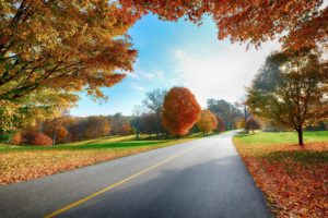nature, Landscapes, Roads, Trees, Leaves, Autumn, Fall, Seasons, Colors, Sky, Clouds, Sunlight