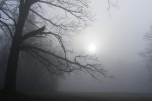sunlight, Trees, Fog, Mist