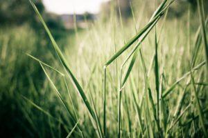 plants, In, The, Field