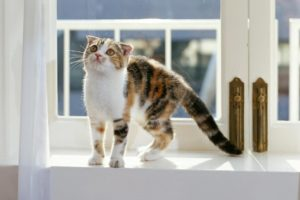 cats, Animals, Feline, Window, Panes