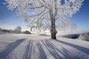 landscapes, Nature, Snow, Sun, Shadows, Gray, Hair, Branches, Hoarfrost
