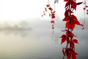 nature, Leaves, Autumn, Fall, Seasons, Maple, Branch, Lakes, Pond, Morning, Fog, Mist, Haze, Islands, Trees
