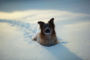 animals, Dogs, Canines, Humor, Funny, Cute, Fur, Face, Eyes, Tracks, Foot, Prints, Trail, Path, Winter, Snow, Seasons, White, Sunlight, Sparkle