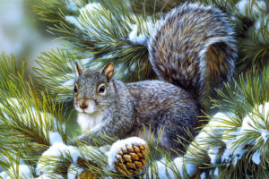 squirrels, Animals, Rodents, Art, Artistic, Nature, Wildlife, Winter, Snow, Seasons, Trees, Branch, Limb, Fir, Pine, Face, Eyes, Whiskers