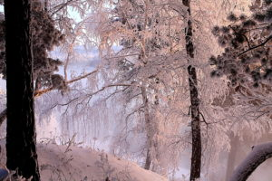 nature, Landscapes, Lakes, Shore, Trees, Forest, Winter, Snow, Seasons, Cold, Water, Reflection