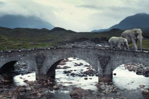 animals, Bridges, Elephants, Rivers, Isle, Of, Skye, Baby, Elephant, Baby, Animals