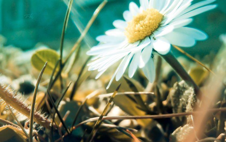 nature, Flowers, Landscapes, Fields, Grass, Petals, Macro, Close, Up, Bokeh HD Wallpaper Desktop Background