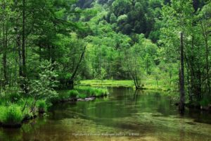 nature, Landscapes, Rivers, Stream, Water, Banks, Shore, Trees, Forest, Hills, Green, Spring, Seasons, Reflection