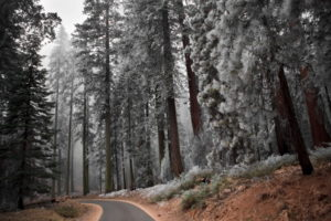 nature, Landscapes, Trees, Forest, Autumn, Fall, Seasons, Frost, Cold, Roads, Path, Trail