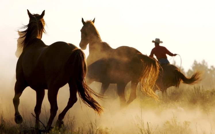animals, Horses, People, Cowboys, Dust, Men, Males, Rustic, Western HD Wallpaper Desktop Background