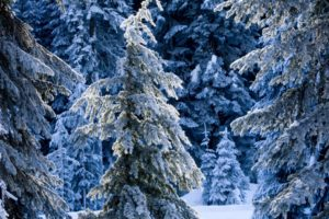 nature, Trees, Forest, Winter, Snow