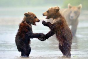 animals, Bears, Play, Mood, Rivers, Nature, Predator, Wildlife