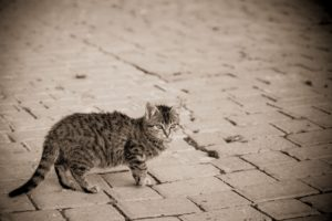 gray, Street, Kitten, Cat