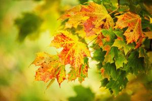 trees, Autumn, Fall