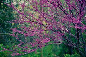 nature, Trees, Flowers, Pink, Flowers, Flowered, Trees