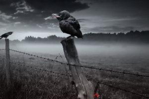dark, Horror, Gothic, Poe, Poem, Raven, Death, Fence, Fog, Mist