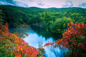 small lake in the jungle nature hd wallpaper 1920×1200 10721
