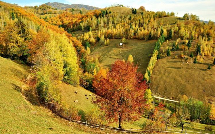 hills, Trees, Forest, Autumn, Fall, Sheep, Animals, Pasture, Fields HD Wallpaper Desktop Background