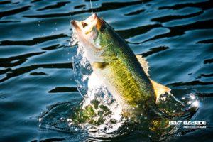fishing, Fish, Sport, Water, Fishes, Lake, River, Bass