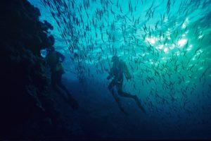 scuba, Diving, Diver, Ocean, Sea, Underwater, Fish