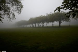 landscapes, Trees, Fog, National, Geographic