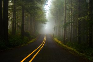 fog, Forest, Road
