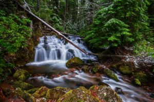 forest, Trees, River, Waterfall, Nature