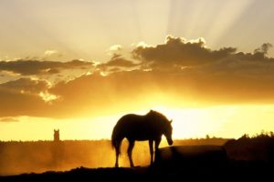 silhouette, Animals, Horses, Landscapes, Sunset, Sunrise, Sky, Clouds, Beams, Rays