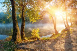 leaves, Landscape, Beautiful, Nature, Sunbeams, Sunlight, Autumn, Trees, Fog, Mist, Sunrise, Mood