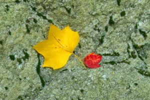 automne, Season, Nature, Landscapes, Rain, Fall, Wallpapers, Leaf, Tree, Campaign, Wet